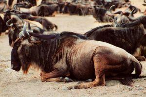 GNU in the wild