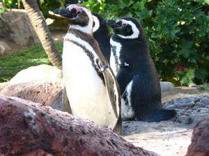 Penguin in park