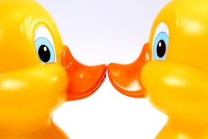 Ducks kiss