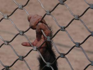 Monkey freedom