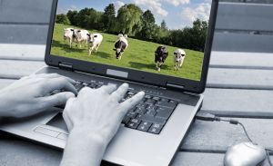 Laptop cows