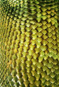 Lizard skin texture