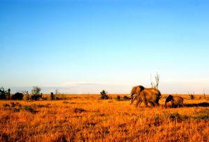 Kenya, Africa - agriculture
