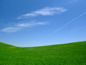 Vista in field