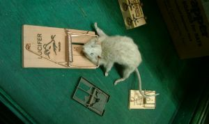 Mice in a mousetrap