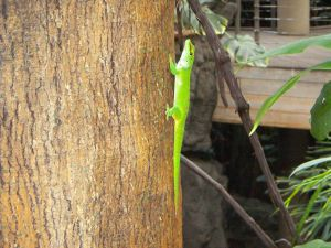 Gecko on tree