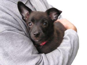Doggy hug