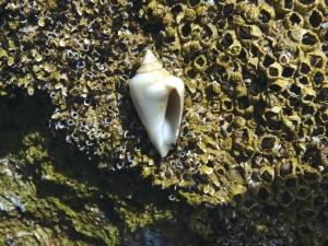 Sea shell - sea life