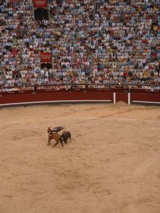 Bull fight