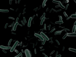 Bacteria