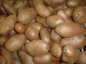 Batatas