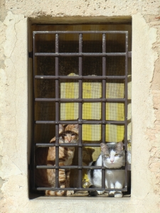 Jailed cats