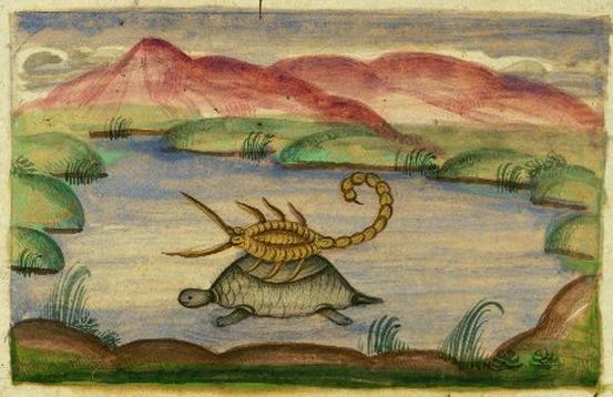 Tortoise and Scorpion