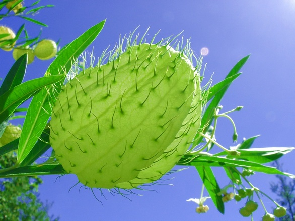 A seed