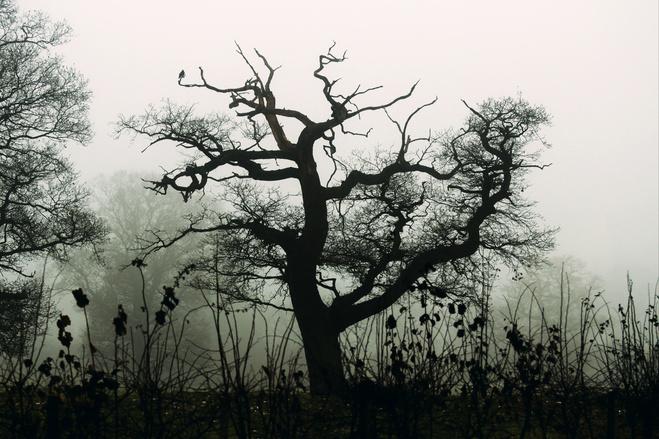 A spooky tree