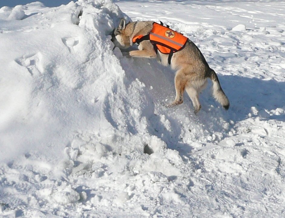 Avalanche training