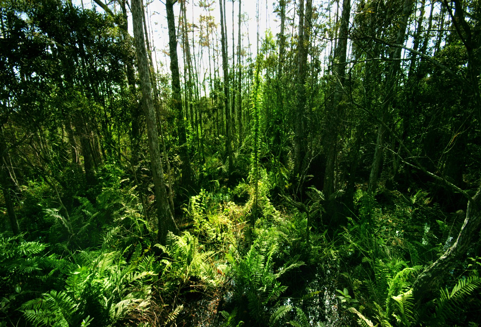 A jungle