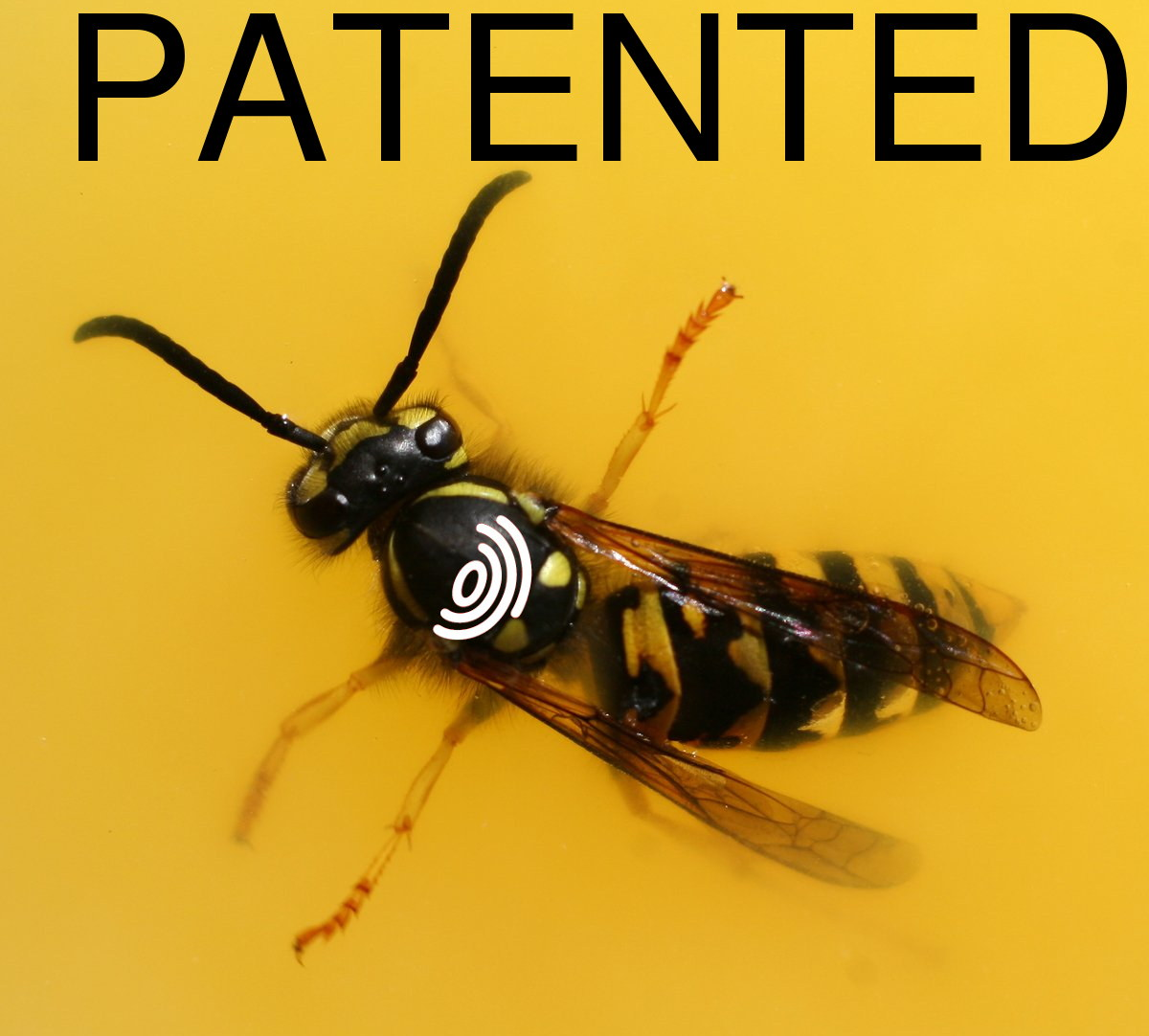 EPO patented wasp
