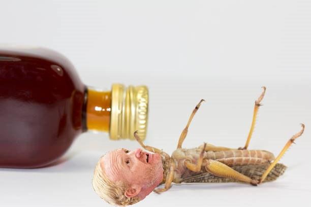 EPO grasshopper