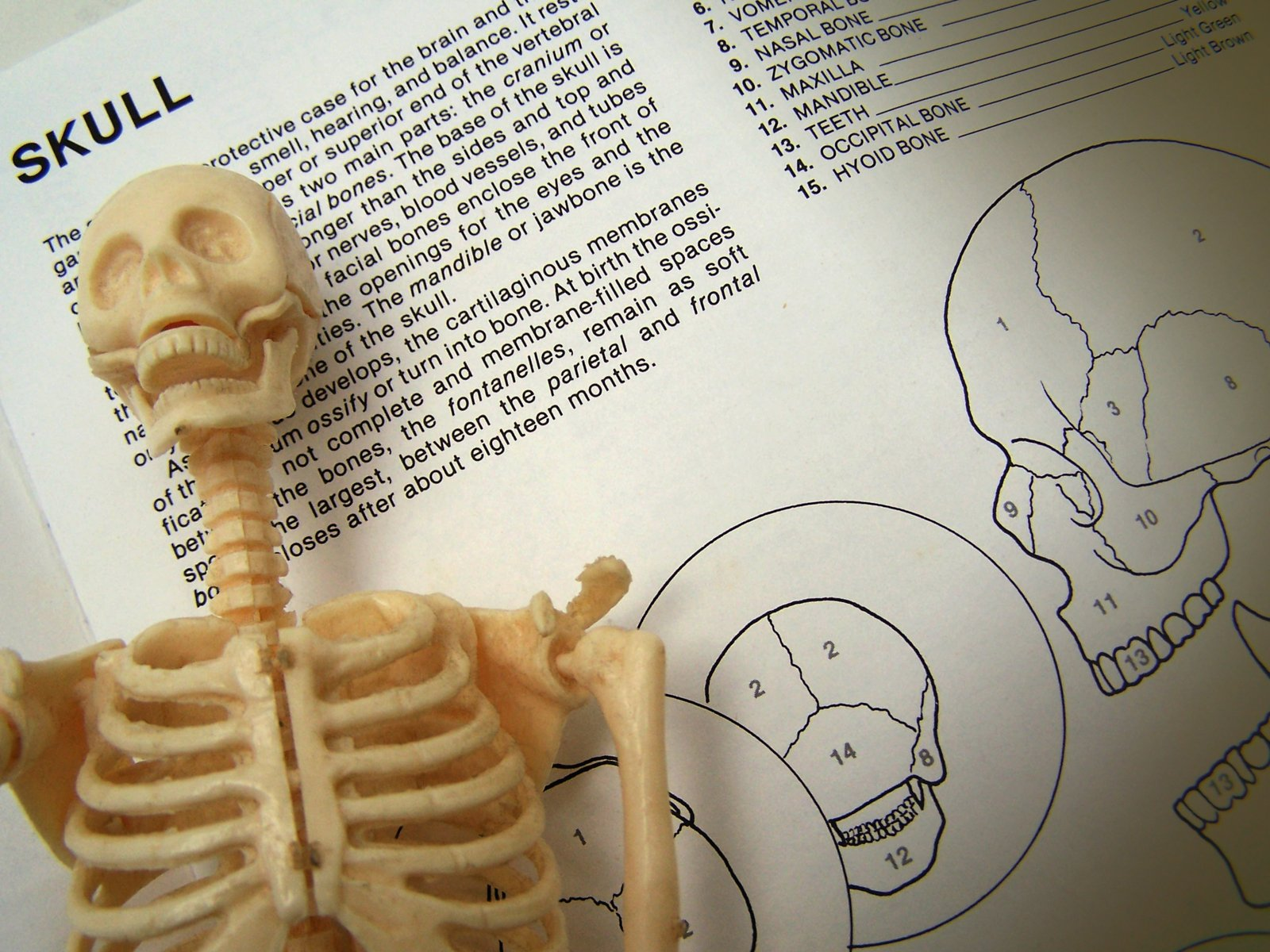 Skeleton Study/Pile of 'reports' and 'studies'