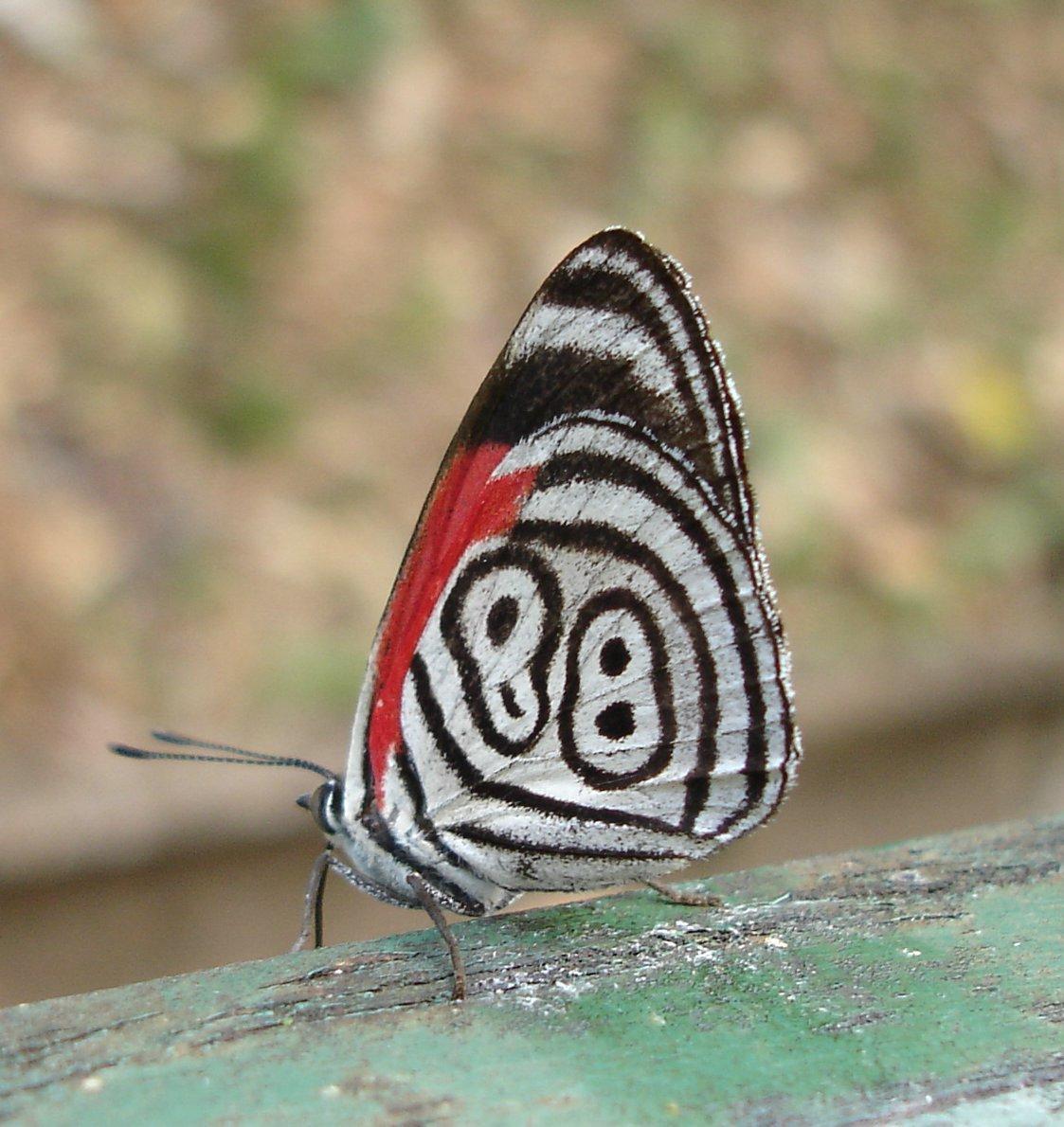 FOSSForce butterflies