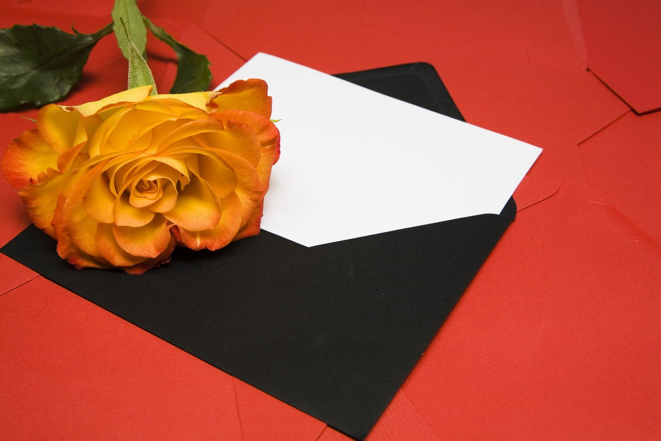 Apology letter and rose