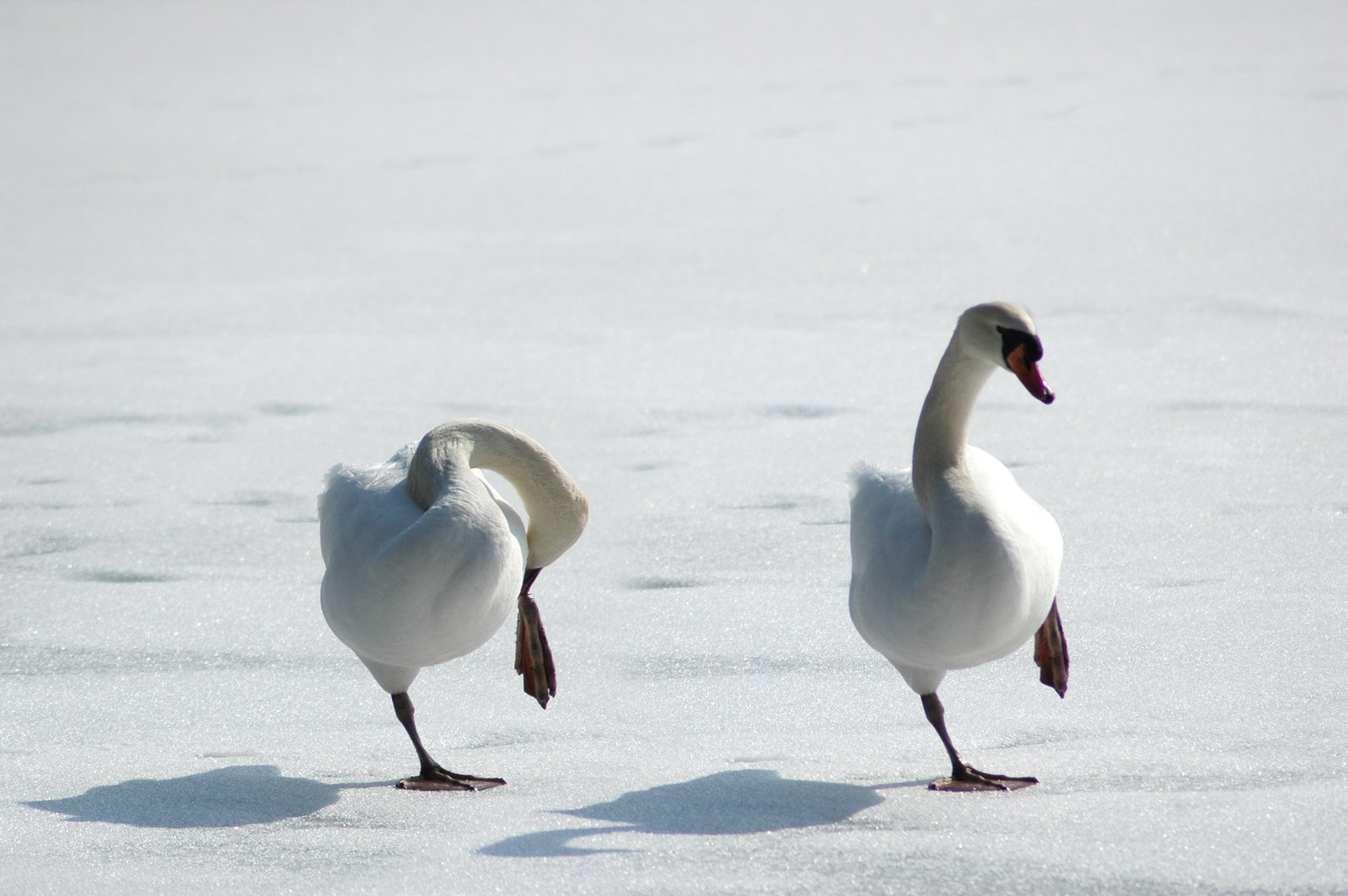 Standing on thin ice