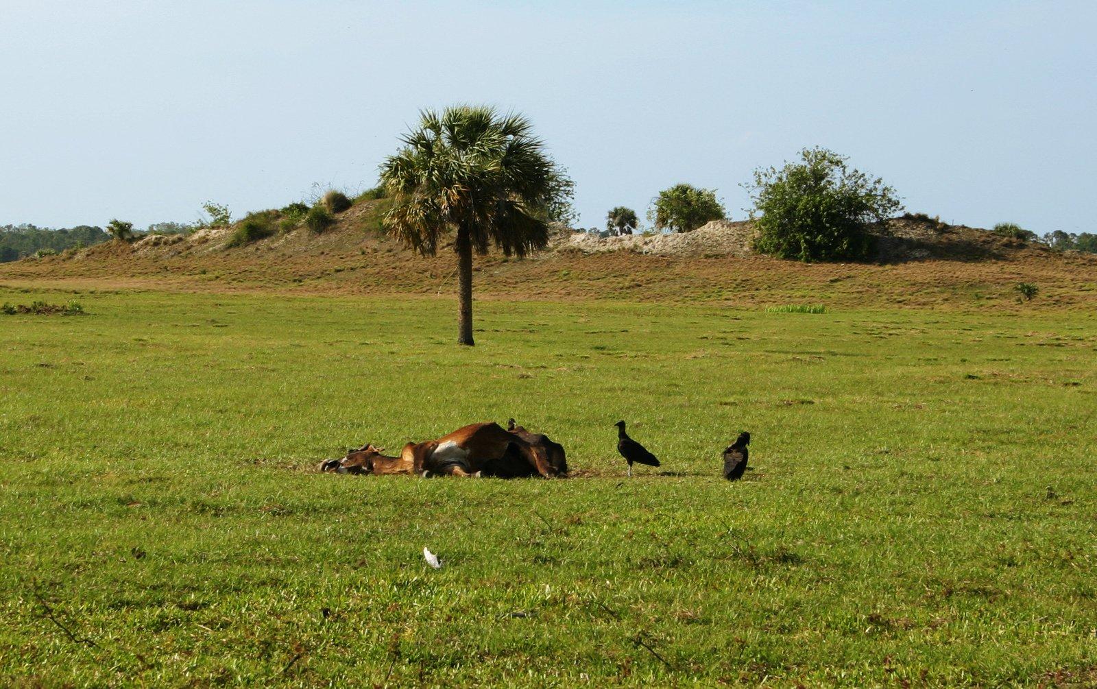Vultures abound