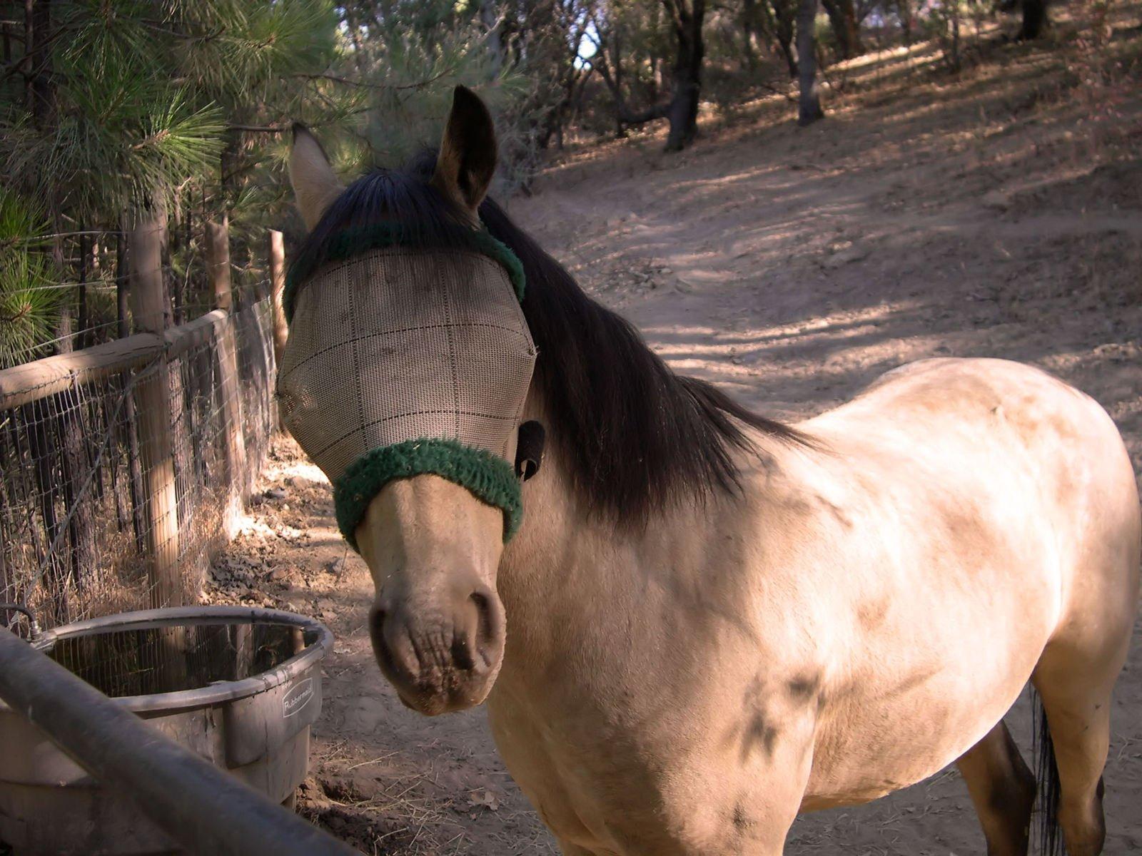 A blindfolded horse