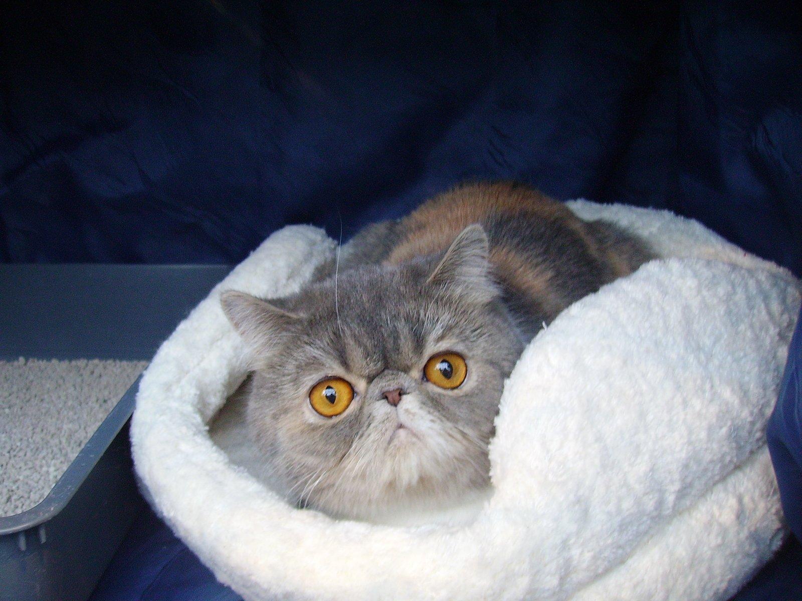 A baffled cat