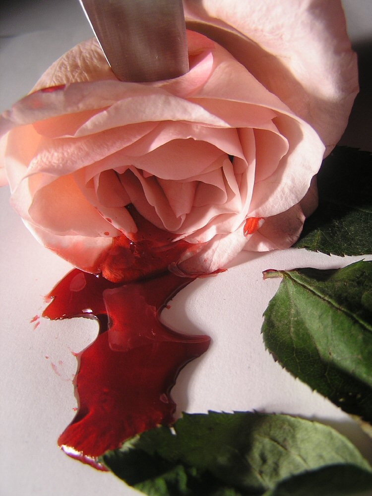 The bleeding roses