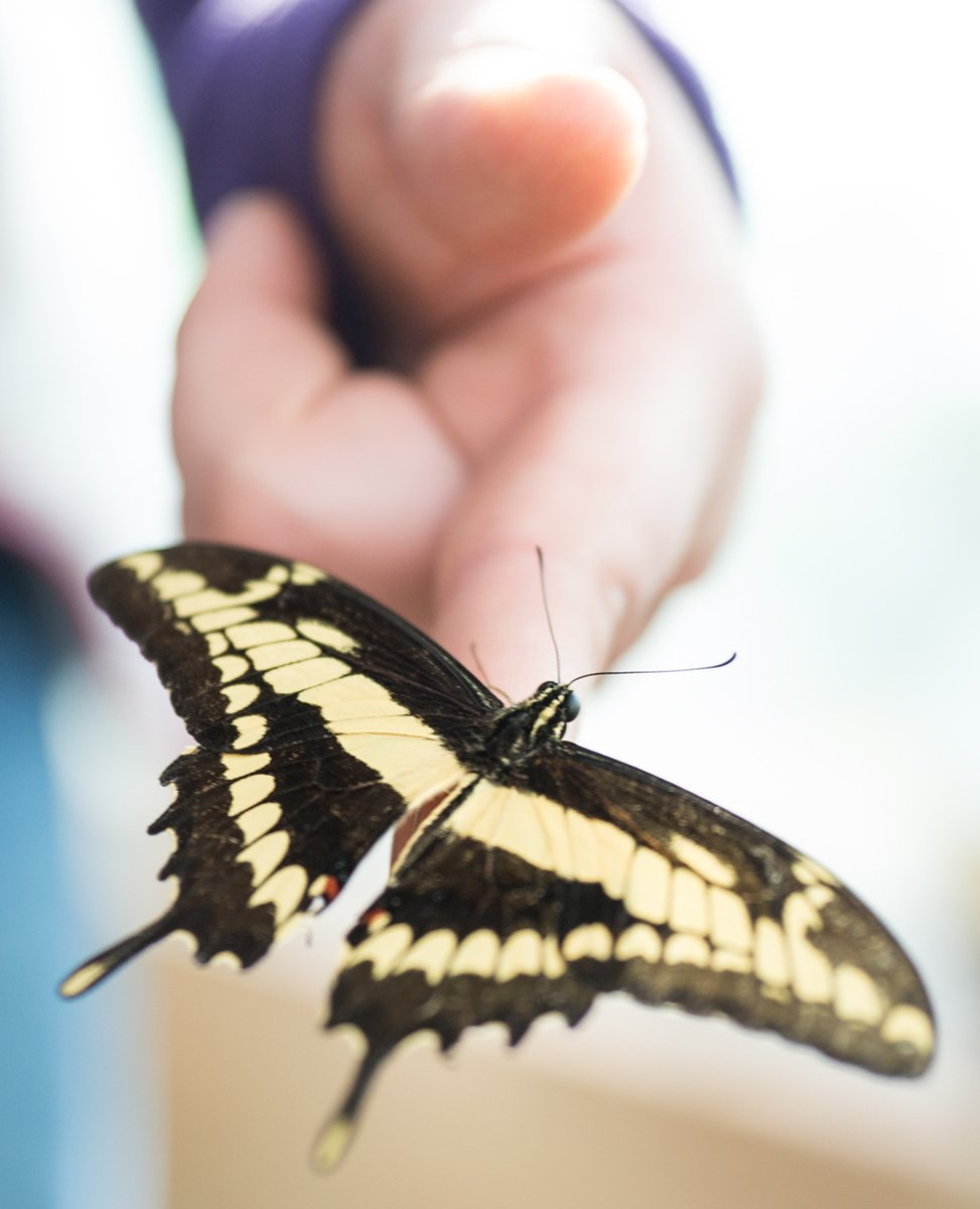 Butterfly Sitting on Human Hand/Finger