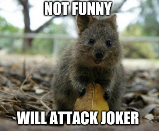 Offensive Joke Quokka: not funny, will attack joker