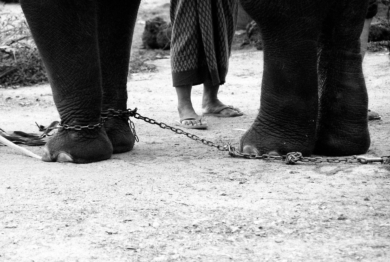 My feet, my freedom