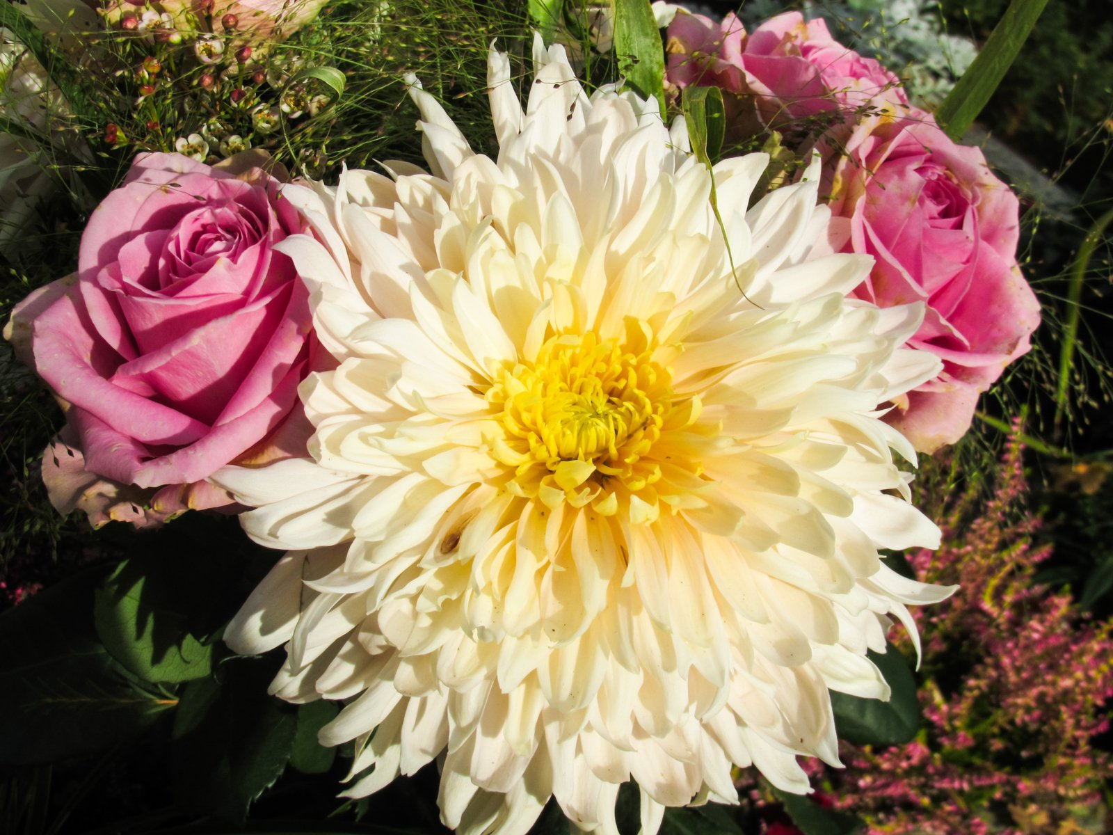 Dahlia and roses