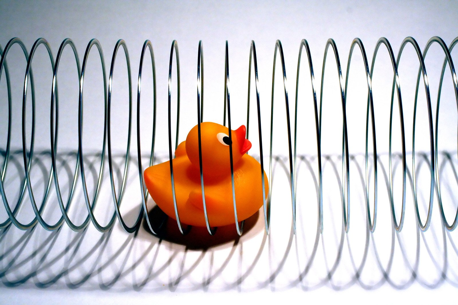 Duck with Slinky