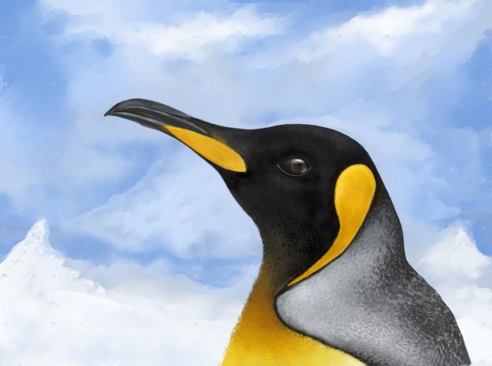 A king penguin by Mogz