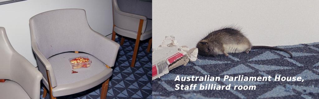 Australian Parliament House, dead rat